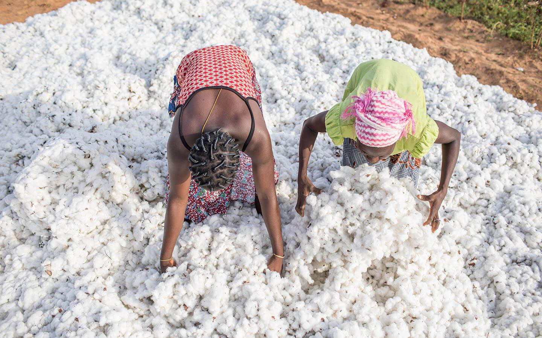 Un tas de coton au Bénin